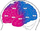 Lifehcange EFT - Hersenscan_4_behandelingen