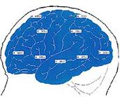 Lifehcange EFT - Hersenscan_gezond_persoon